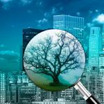 Consultoria licença ambiental